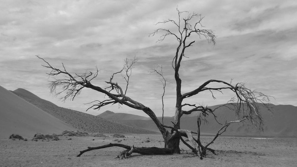 Desert Deserts Around The World Namibia Namibia Landscape NamibiaPhotography Sossusvlei Sossuvlei, Namibia Bare Tree Beauty In Nature Dead Tree Desert Beauty Desert Landscape Landscape Lone Nature Sand Sky Tranquility Tree Tree Trunk