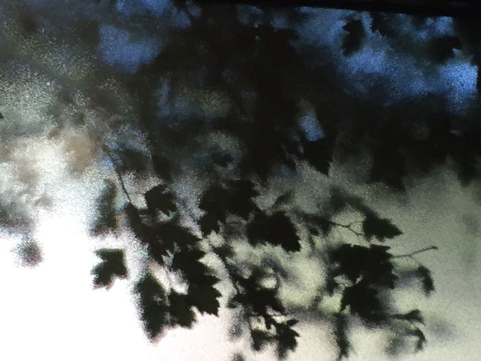 Leaves through Window Photography Abstract Trees Leaves Window Translucent Light Eyeemphoto