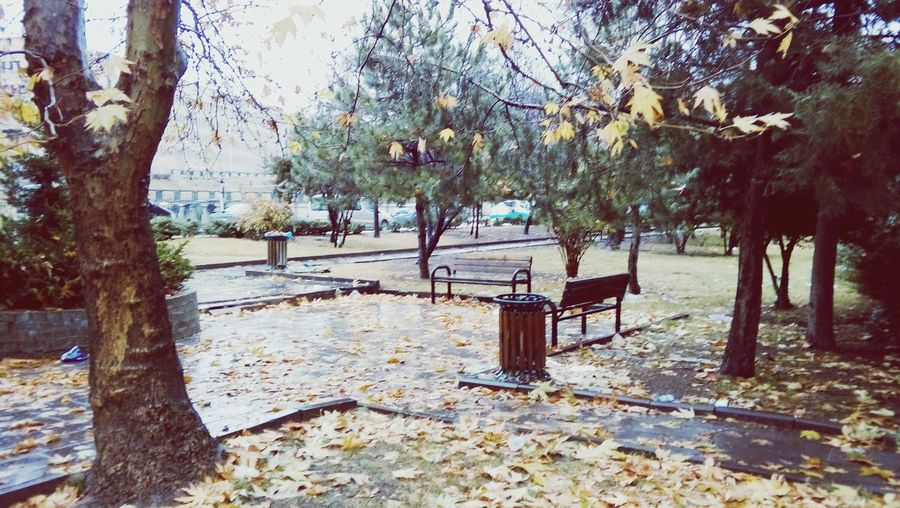 Tree Nature Outdoors No People Day Beauty In Nature Branch Adapted To The City Autumn🍁🍁🍁