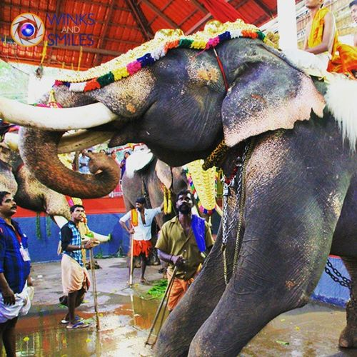 Shot at a Pooram Festival in Kerala. Pooram is an annualfestival, which is celebrated inTemplesdedicated to goddessesDurgaor Kali held especially inValluvanaduarea and other adjoining parts of north-central Kerala (PresentPalakkad ,Thrissurand Malappuramdistricts ) after the summer harvest. Most pooram festivals have at least one ornately decoratedElephant , but it can go up till 30-35 elephants being paraded in the procession taken out of the temple precincts. Pooram Festival Kerala GodsOwnCountry Ottapalam Palakkad Valluvanadu