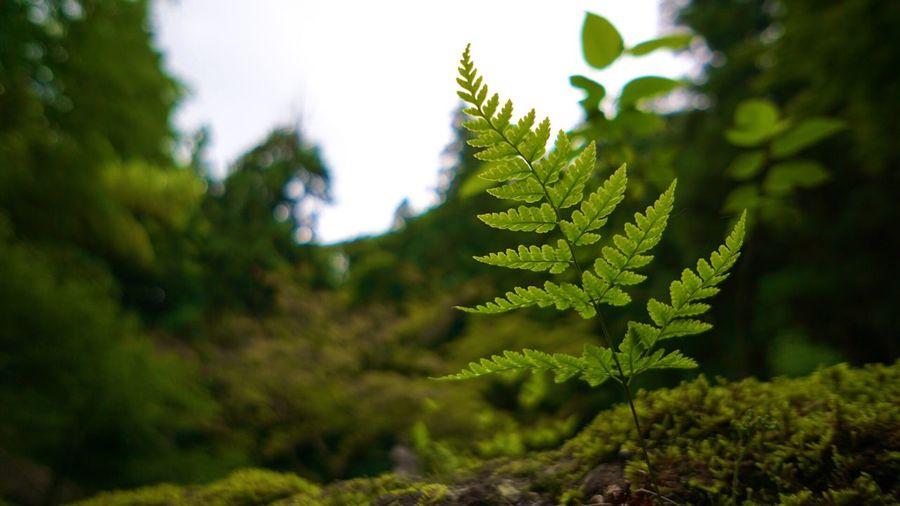 シダ の 葉っぱ と 苔 が好きです‼︎ Japan Photography Leaf Popular Photos Nature