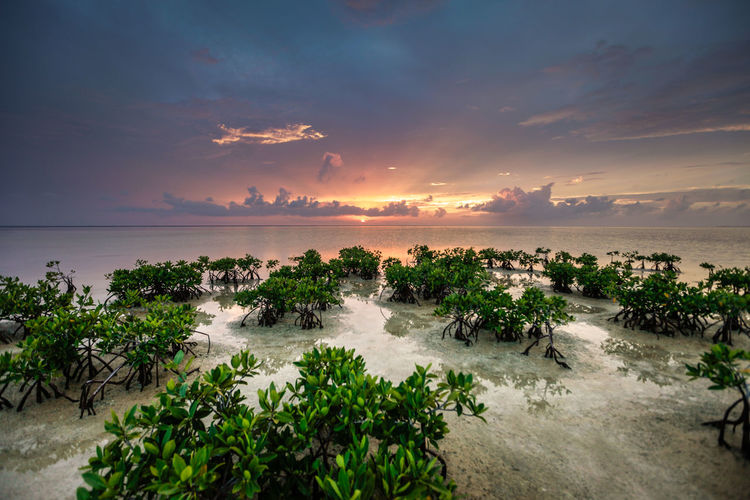 Beauty In Nature Cloud Cloud - Sky Cloudy Coastline Horizon Over Water Mangrove Mangroves Nature Outdoors Peace And Quiet Peaceful Peaceful View Plant Quiet Places Relaxing Relaxing Moments Scenics Sea Shore Sky Sunset Tranquil Scene Tranquility Water
