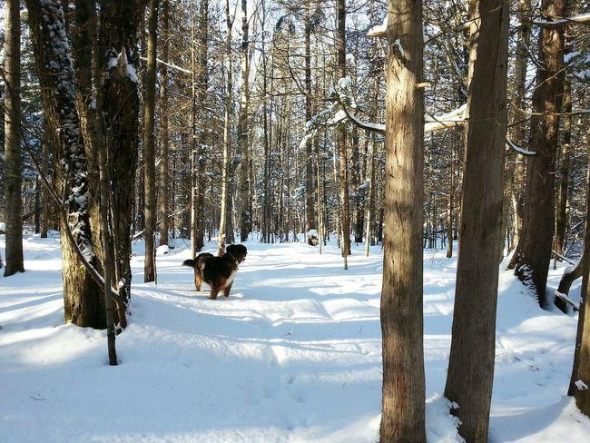 Dog Winter Trees Snow ❄