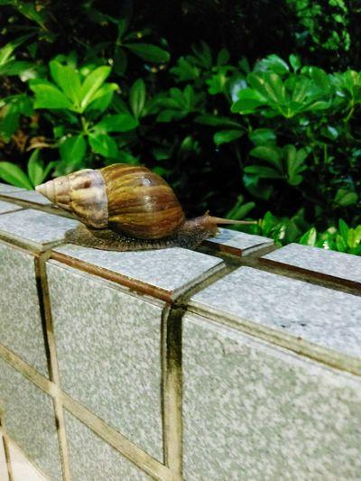 Leaf Nature Katacomuli HTC 10 Snail