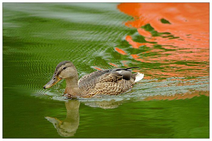 EyeEm Best Shots - Nature Schwanenteich Giessen For You ;-) Streamzoofamily