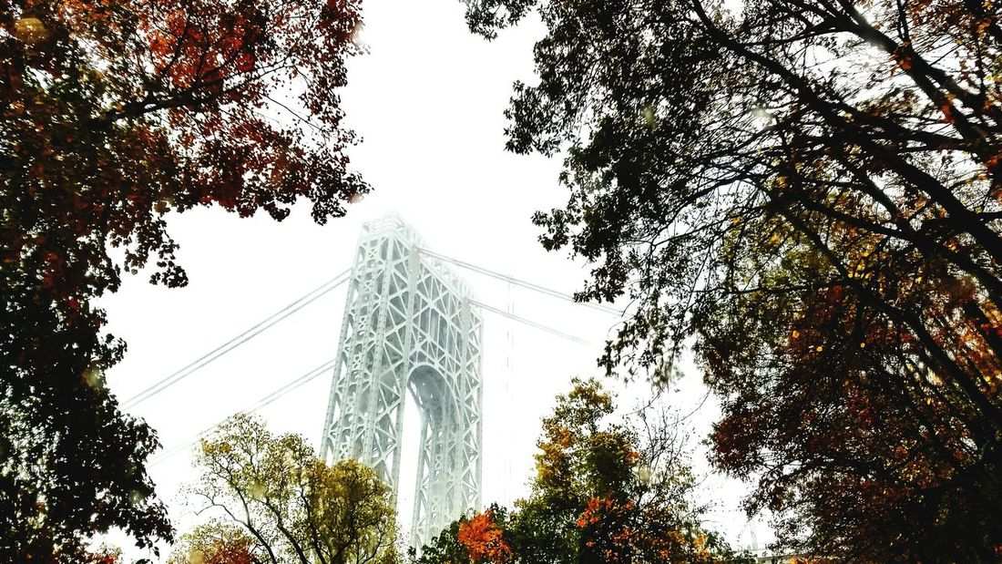 Bridge and Fall... Tree Architecture Low Angle View Travel Destinations No People Built Structure Sky Day Outdoors Branch Beauty In Nature Architecture Palisades State Park George Washington Bridge Suspension Bridge The Week On EyeEm Fog Tranquil Scene Steel On A Foggy Day EyeEm Selects Atmospheric Mood Cityscape Transportation Nature Shades Of Winter
