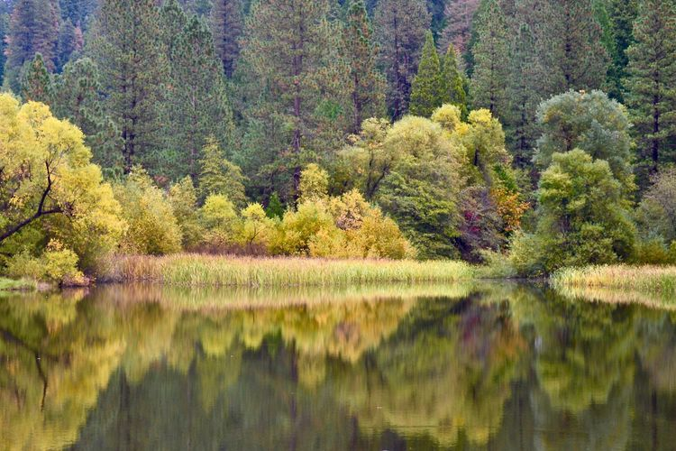 Nature Tree Reflection Water Forest Outdoors Scenics Tranquility Beauty In Nature Flower No People Landscape Day Scenics - Nature Green Color Nature The Great Outdoors - 2018 EyeEm Awards