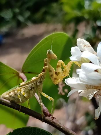 Full Length Perching Insect Leaf Flower Close-up Animal Themes Plant