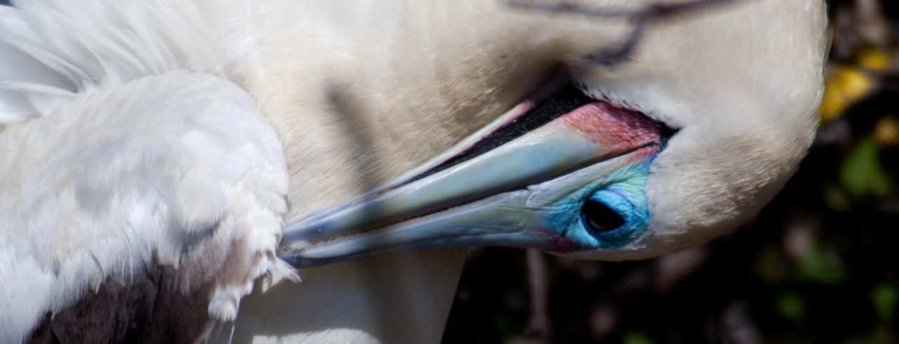 Close-up of white bird preening
