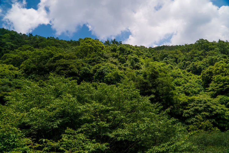 EyeEmNewHere Beauty In Nature Cloud - Sky Day Environment Foliage Forest Green Color Growth Land Lush Foliage Mountain Nature No People Non-urban Scene Outdoors Outdoors Photograpghy  Plant Rainforest Scenics - Nature Sky Street Streetphotography Tranquil Scene Tranquility Tree