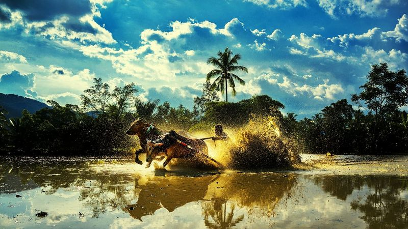Ride through the mud.... Pacu Jawi Sports Photography Padang Race