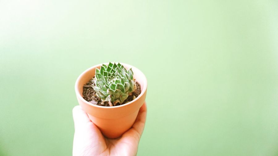 Close-Up Of Hand Holding Small Potted Plant Against Green Background