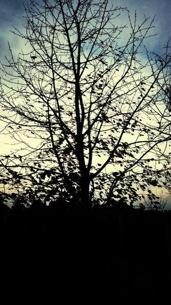 ?? Eye4photography  EyeEm Nature Lover Tree Sunset