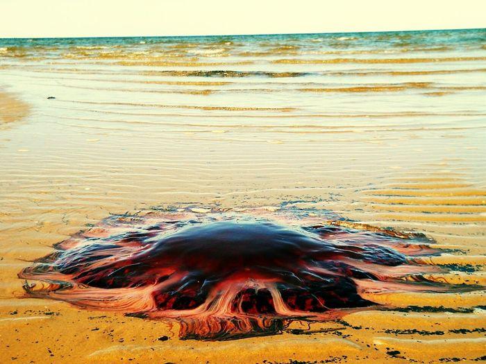Белое море север Море медуза красота