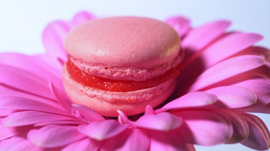 Pink macaroon - delicious and beautiful french dessert rotating on gerbera flower on blue background. Cooking, food, baking, nature concept Pink Color Sweet Food Food Sweet Dessert Food And Drink Close-up Indulgence Freshness Flower Temptation Flowering Plant Unhealthy Eating Baked Plant No People Indoors  Cake Studio Shot Celebration Macaroon Valentine's Day - Holiday Purple