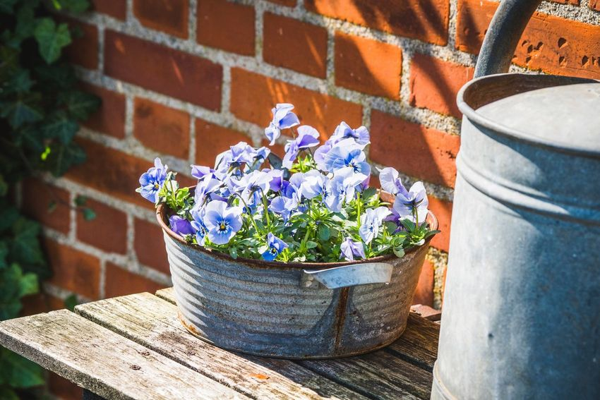 Flowers in the metal barrel on the table in a yard Summer Flowering Plant Flower Plant Nature Potted Plant Growth Day Sunlight Beauty In Nature Container Flower Pot High Angle View Freshness Fragility Vulnerability  No People Outdoors Close-up Wall Wall - Building Feature