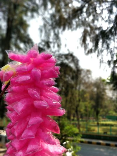 Cottoncandy Pink Colorsplash Pop Of Pink Pop Of Color Pink Color Focus On Foreground Freshness Day Close-up