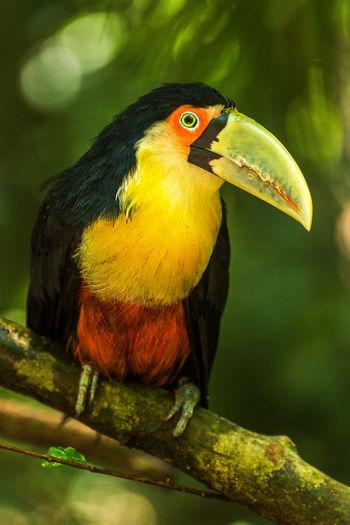 Close-up of hornbill perching on tree