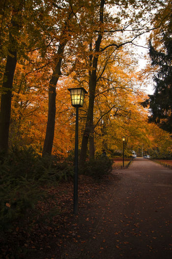 Street light by trees in forest during autumn