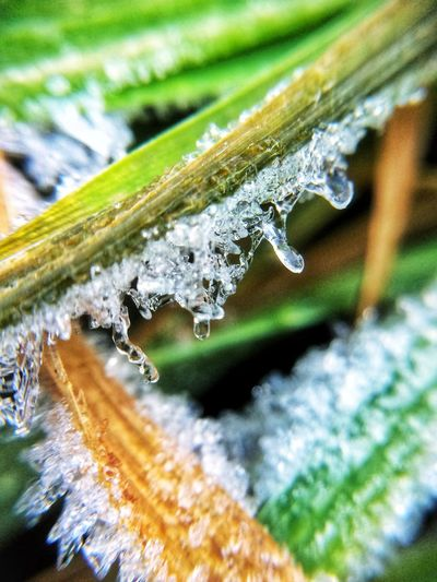 Close-up of icicles on grass