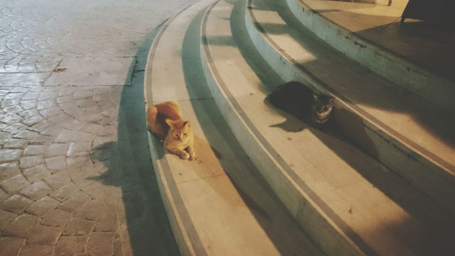 High Angle View Shadow Transportation Outdoors Day No People Malta City Nature Photography Beauty In Nature Cats Cat Lovers Catoftheday Cat