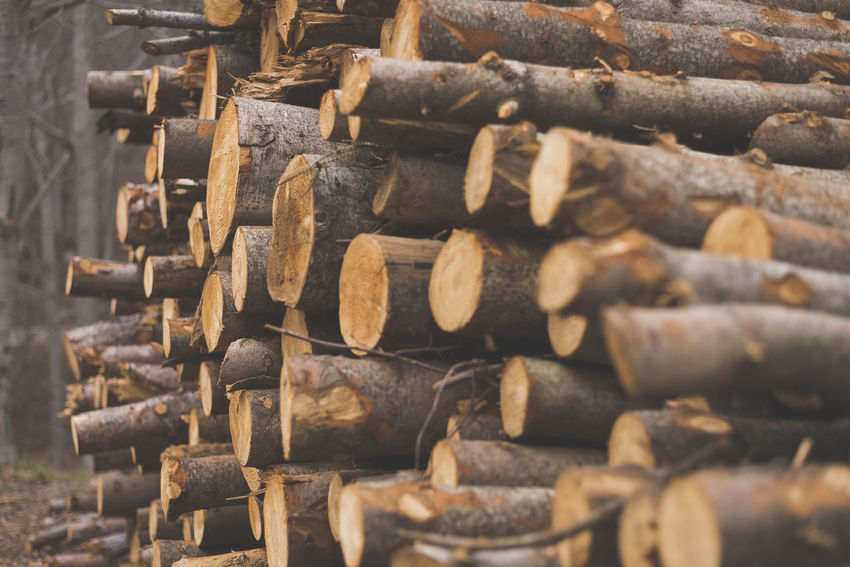 Pile of chopped tree trunks in winter forest Log Large Group Of Objects Firewood Wood - Material Stack Timber Wood Deforestation Lumber Industry Abundance No People Forest Selective Focus Close-up Still Life Full Frame Day Tree Nature Backgrounds