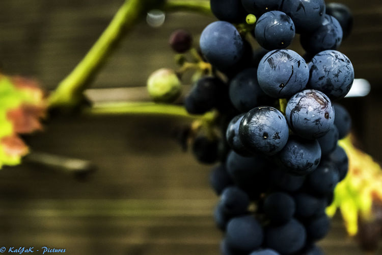 Abundance Arrangement Berry Blueberry Close-up Focus On Foreground Food Food And Drink Freshness Fruit Group Of Objects Healthy Eating Juicy Large Group Of Objects My Red Wine My Wine And Me!!! Nikon Nikon D5500 Nikon D5500 Inner Structure Model Nikonphotography No People Order Red Wine Selective Focus Vibrant Color
