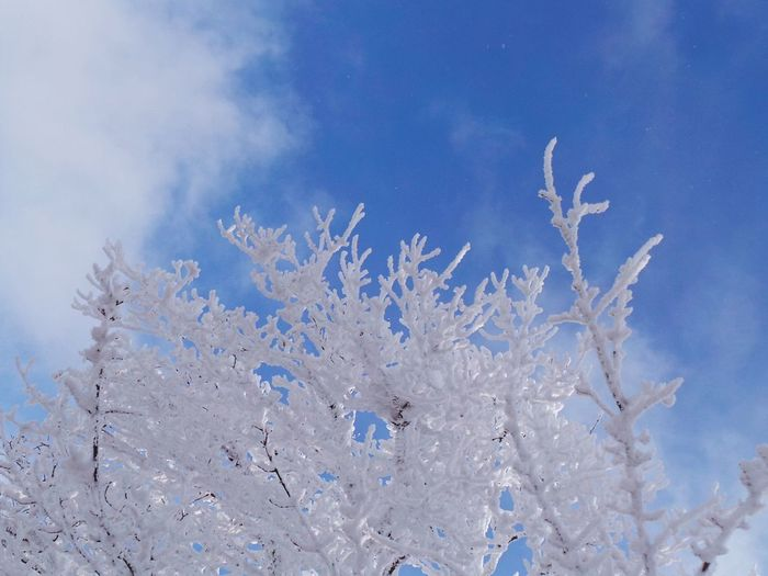 Branches Frozen Slovenia Slovenia Scapes Trees Winter Areh Beauty In Nature Blue Branches And Sky Close-up Day Freshness Frozen Nature Nature No People Outdoors Pohorje Sky Snow Snow Covered Tree Winter