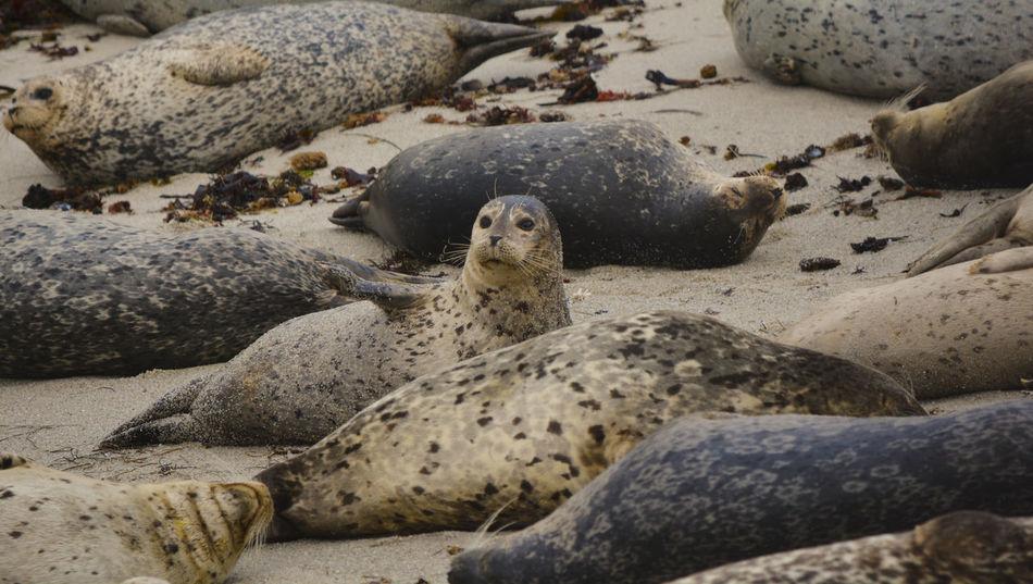 Beach Monterey Ca Sea Lion Sea Lions Seal Wildlife