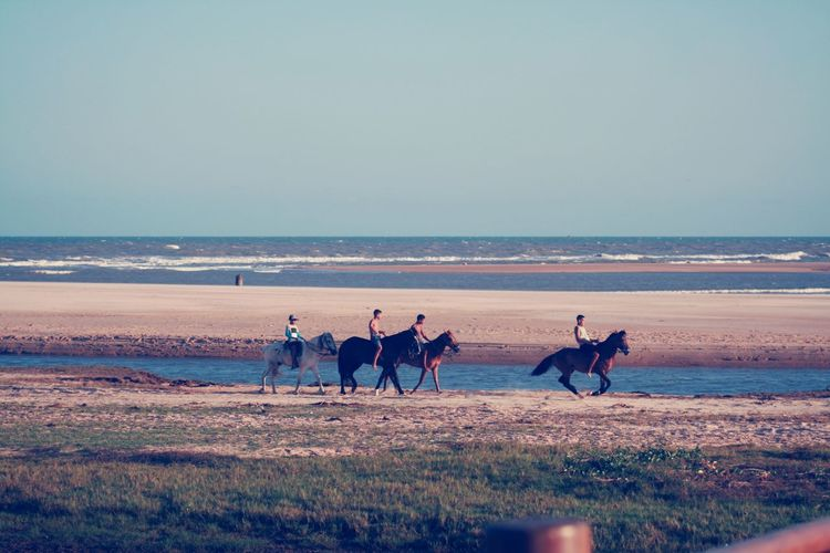 People riding horses at beach against clear sky
