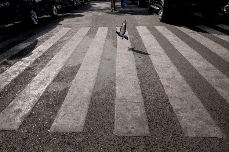 View of zebra crossing on road