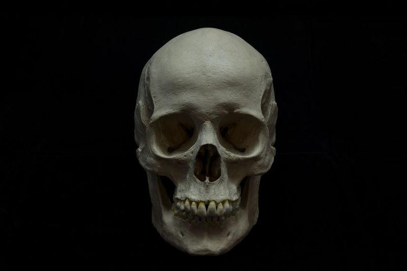 Studio shot of human skull