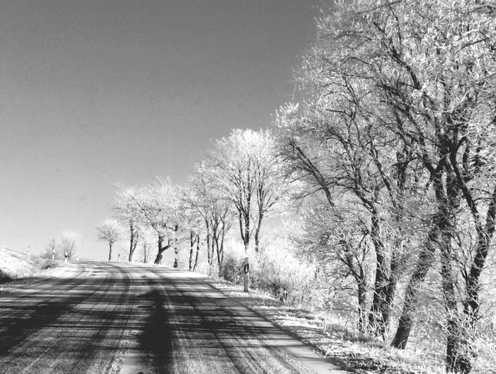 The road to Wasserfall Winter White By CanvasPop