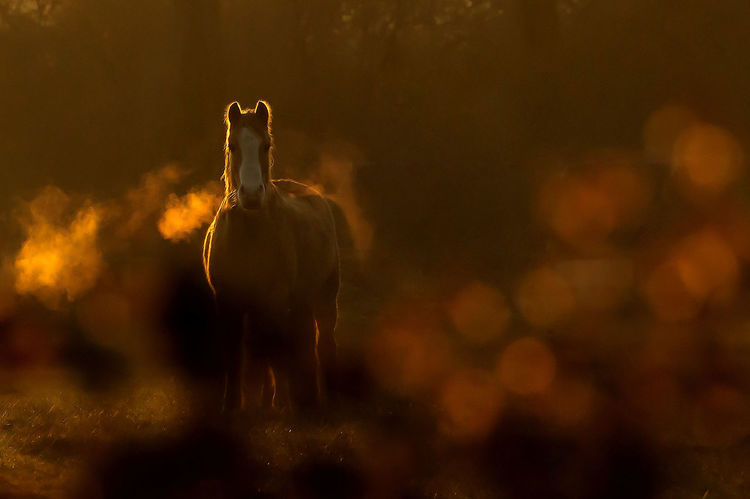 Horse Sunset Red Orange Cold Breath