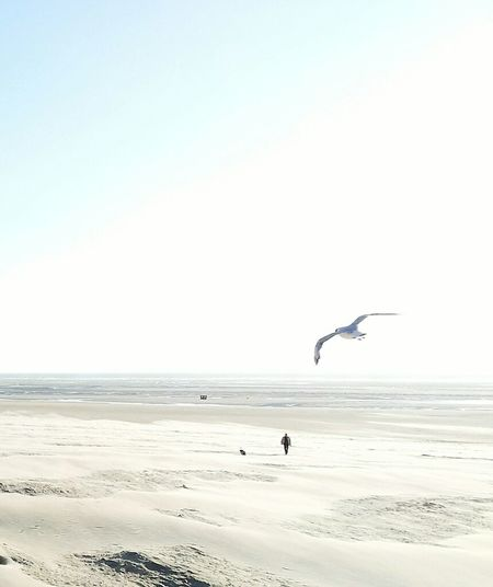 Twofold alone Beach Flying Sea Sand Bird Animals In The Wild Animal Wildlife Nature Beauty In Nature Outdoors Scenics Animal Themes Silhouette Tranquility Mid-air Clear Sky Sky Water Horizon Over Water Seagull One Man Only Dog Walking The Dog Berck Plage France🇫🇷