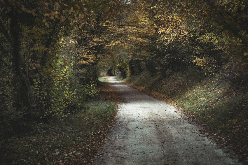 Plant Direction Tree Forest The Way Forward Tranquility No People Growth Nature Land Beauty In Nature Footpath Tranquil Scene Road Day Transportation Scenics - Nature Outdoors Diminishing Perspective Non-urban Scene Trail