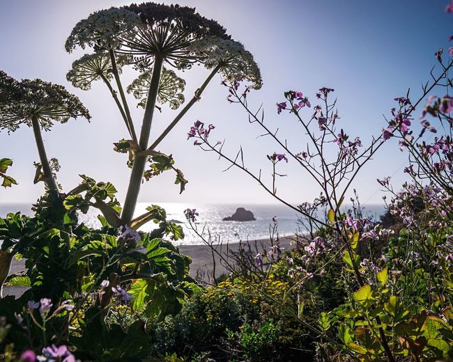 Sonoma Coast Northern California Beach Plant Tree Sky Growth Beauty In Nature Nature No People Low Angle View Tranquility Flower Outdoors Tranquil Scene Scenics - Nature Sunlight Freshness The Great Outdoors - 2018 EyeEm Awards
