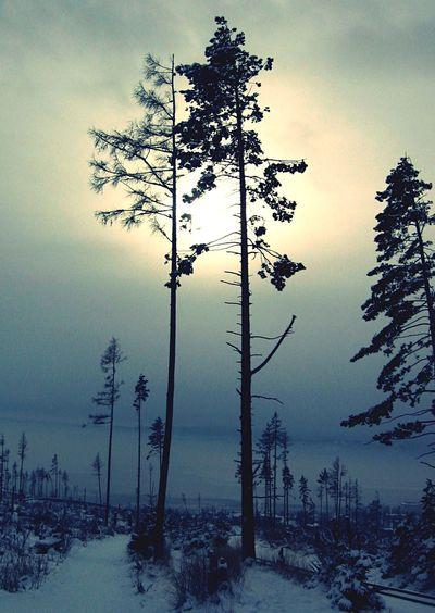 Sun Through Trees Dusk Sillhouette Naked Trees Winter Winter Sun Winter Landscape Snow
