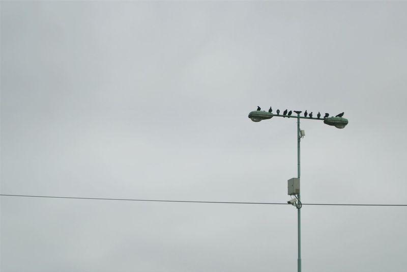 Control Argentina Buenos Aires City The Birds
