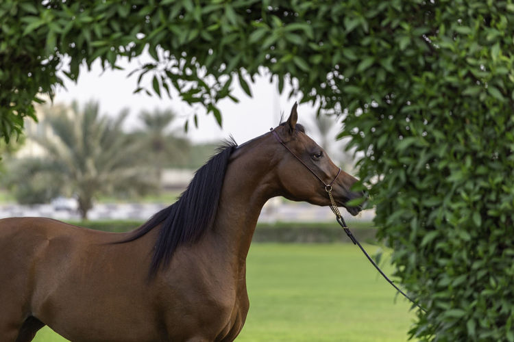 Side view of a horse against blurred background