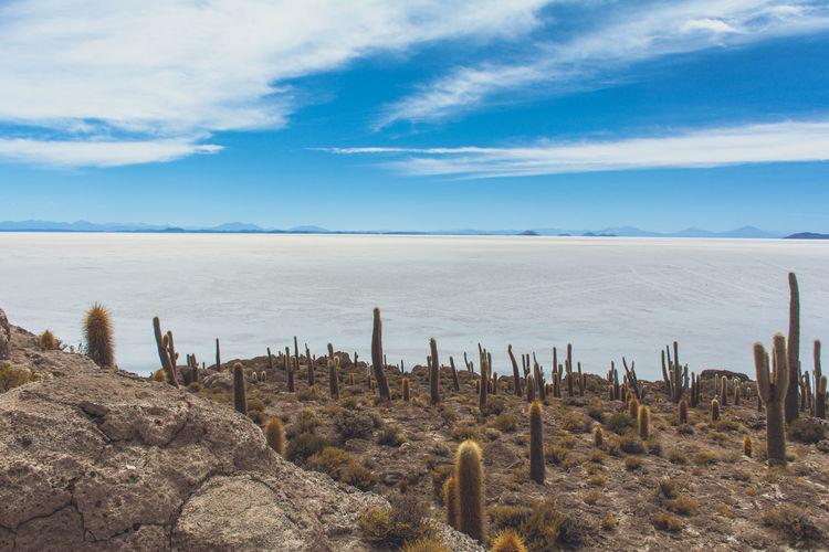 Isla Incahuasi - The Bolivian Salt Flats Beauty In Nature Bolivia Uyuni Cacti Cactus Cactus Flower Cactus Garden Cloud - Sky In A Row Majestic Nature No People Non-urban Scene Plant Salt Flats Scenics Sea Seascape Shore Sky Tranquil Scene Tranquility Water Wooden Post