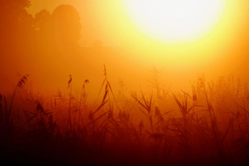goldenfoggysunrise Nature Photography Beauty In Nature Foggy Morning Reinheimer Teich Red Color Yellow My Point Of View My Place To Relax Foggy Rural Scene Fog Tree Cereal Plant Sun Sunlight Field Romantic Sky Atmospheric Mood Shining Forked Lightning Atmosphere