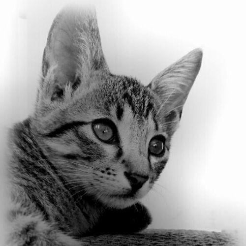 "My rescued kitten ""Fluffy"" Blackandwhite"