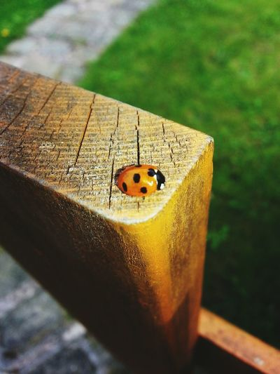 Lazy Lil ladybug Nature Animals Beautiful Photography Challenge