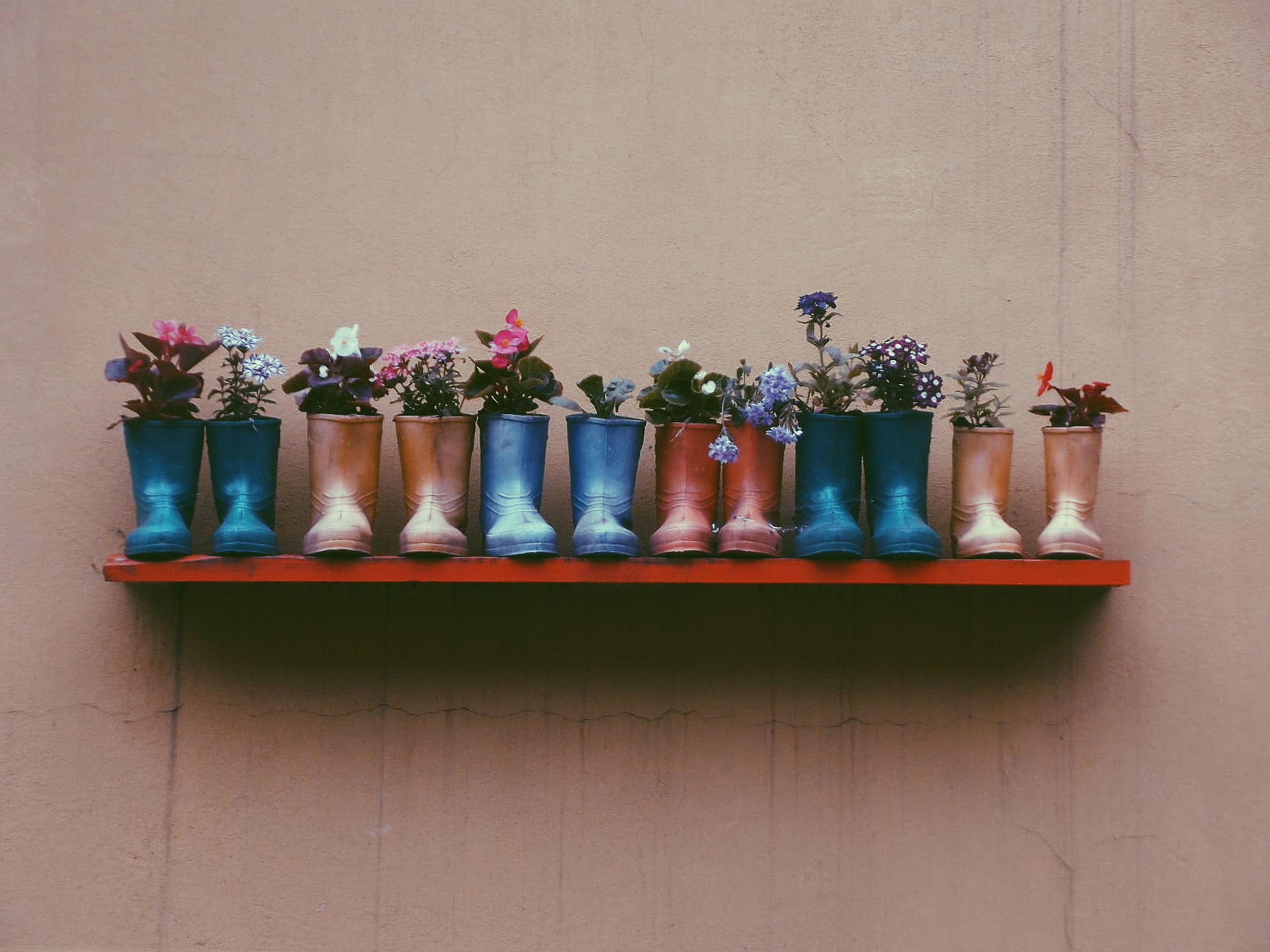 arrangement, no people, indoors, side by side, still life, shelf, variation, wood - material, vase, choice, table, wall - building feature, flowering plant, flower, plant, art and craft, close-up, multi colored, potted plant, ceramics, order