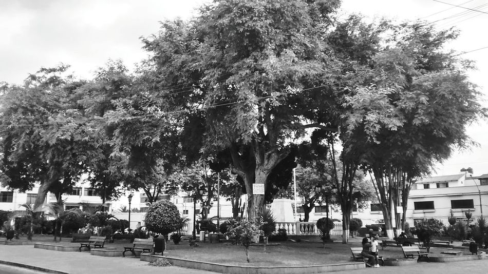 Plaza Zela, TacnaTacna Plaza Park Streetlife Walking Around Black And White Monochrome_Monday Eyeem Monochrome Blanco Y Negro Vida Urbana