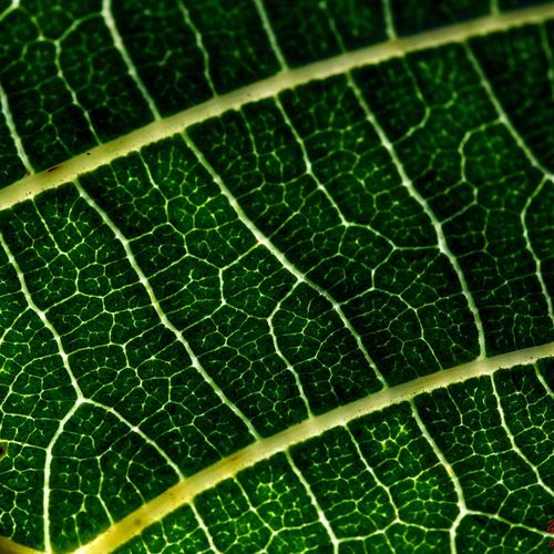 Pattern Pieces Pattern, Texture, Shape And Form Pattern Patterns Patterns In Nature Patterns & Textures Pattern Of Nature Macro Macro Nature Macro_flower Macro_flower Leaf Leafs Leaf 🍂 Green Green Color Nature Nature Photography Nature_collection Nature Textures Summer Summertime Summer2015