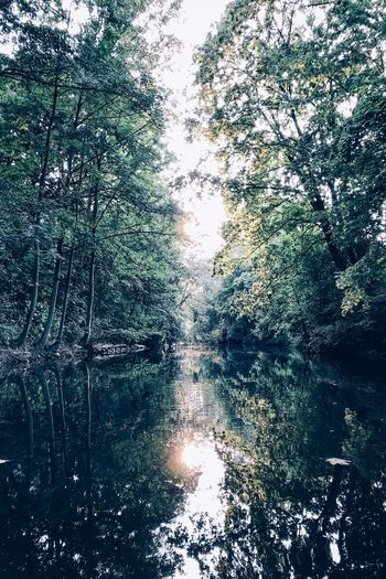 Tree Plant Water Reflection Beauty In Nature Forest Tranquility