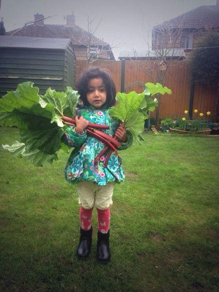 Rhubarb Gardening