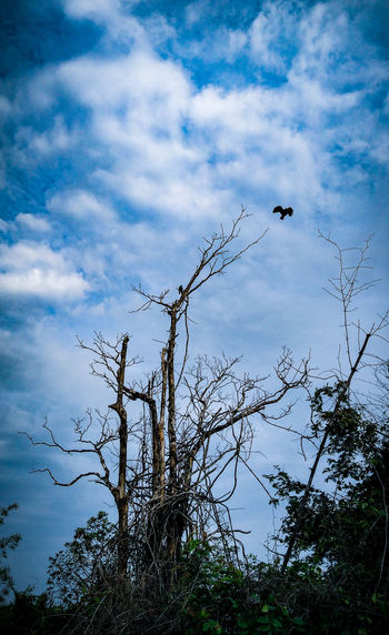 Trust .I never going to leave you alone. Birds Love ♥ Trust Scorched Tree Bluesky EyeEmNewHere